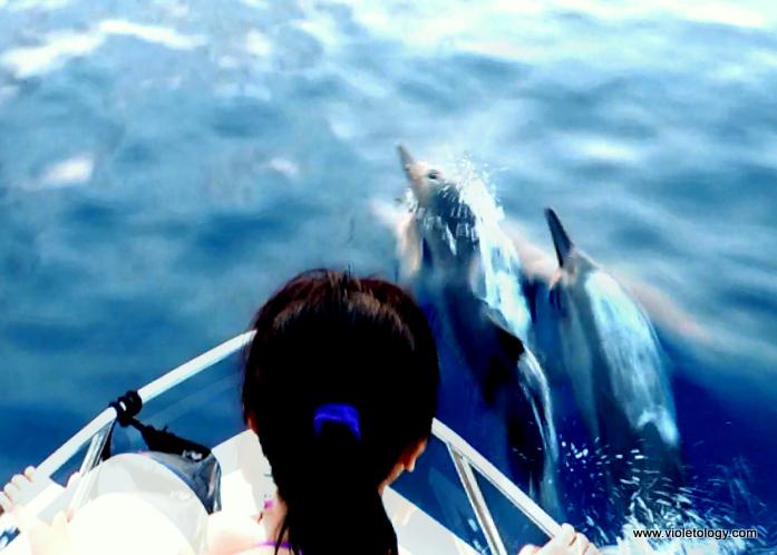 dolphinemaldives (10)