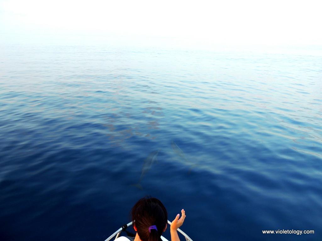 dolphinemaldives (11)