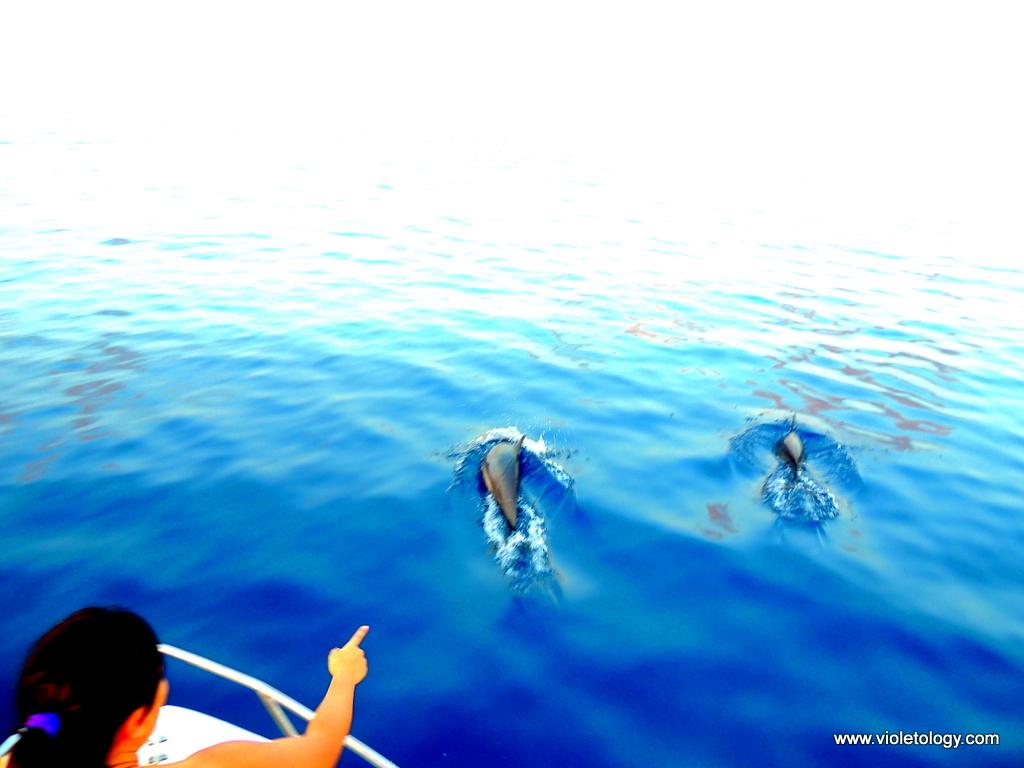 dolphinemaldives (6)