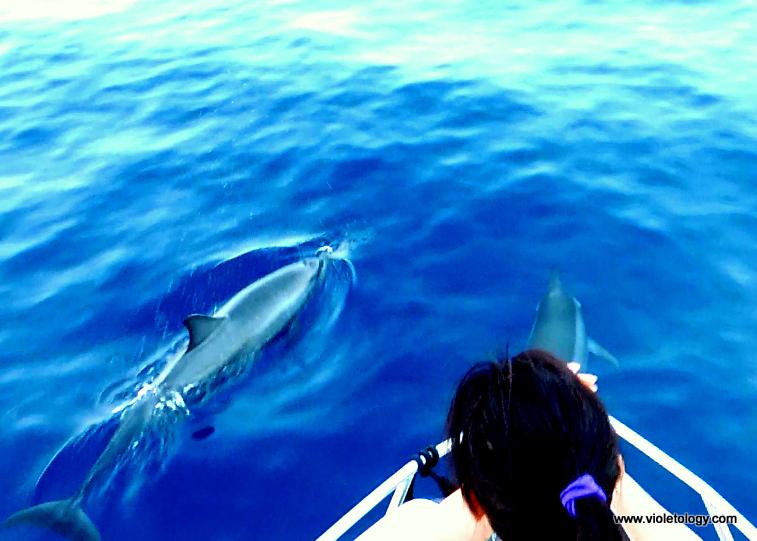 dolphinemaldives (7)
