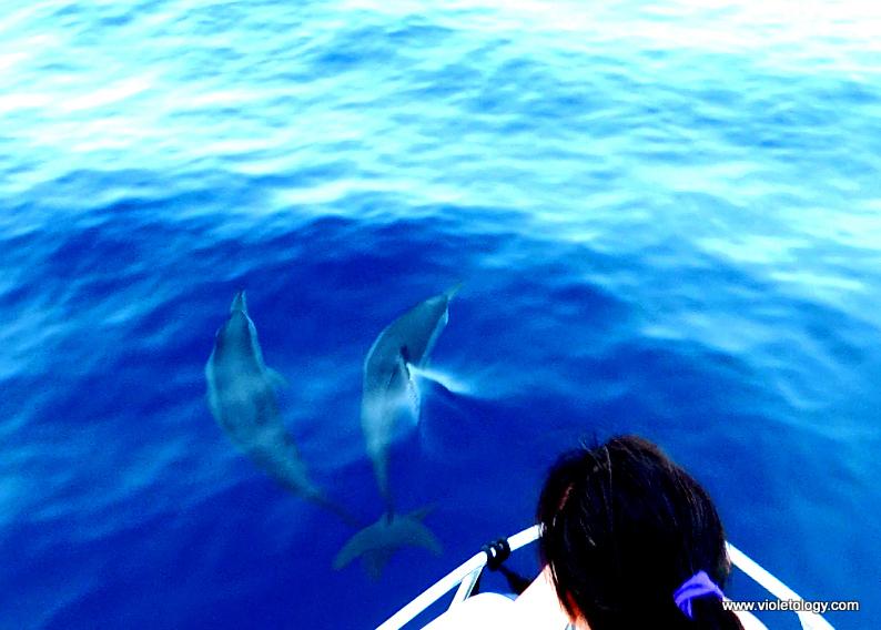 dolphinemaldives (8)