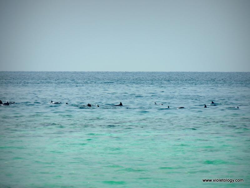 maldivesday2 (17)
