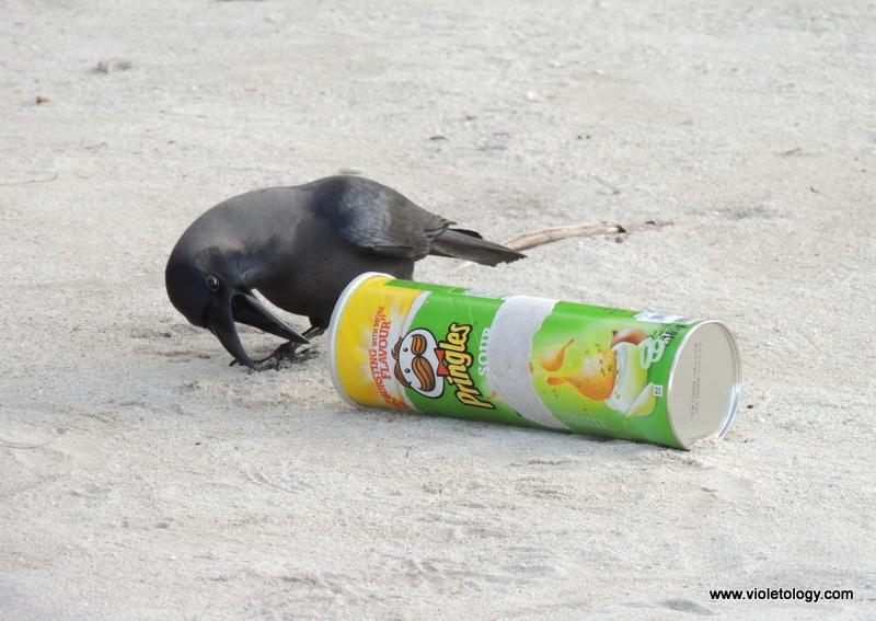 maldivesday2 (20)