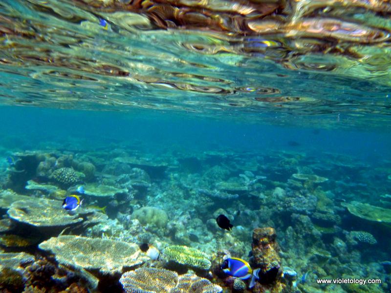 Snorkelmaldives (22)