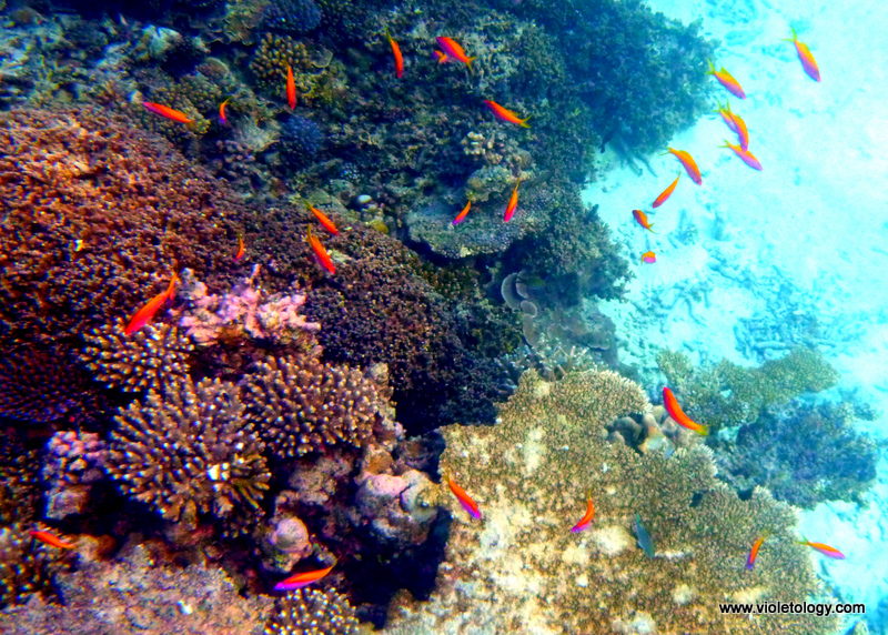Snorkelmaldives (30)