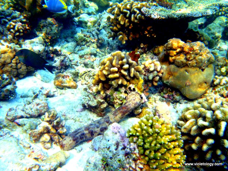 Snorkelmaldives (33)