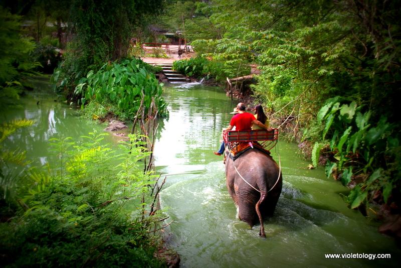 bangkok elephant (10)