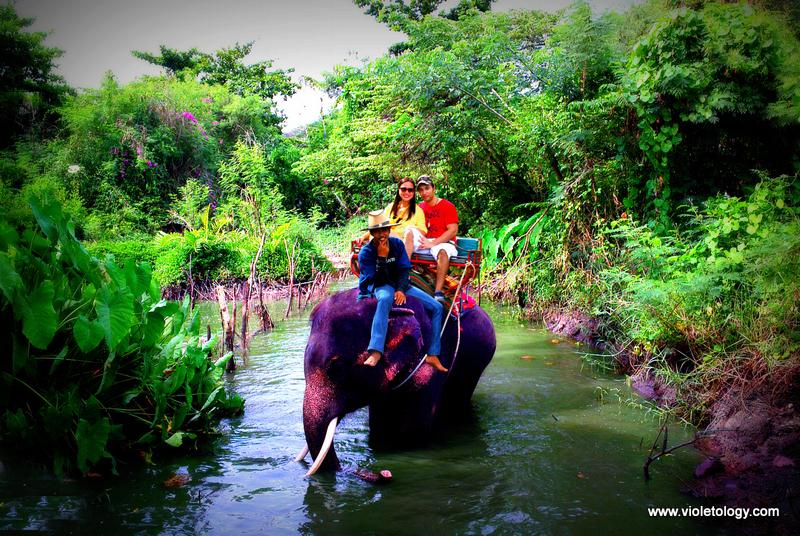 bangkok elephant (11)