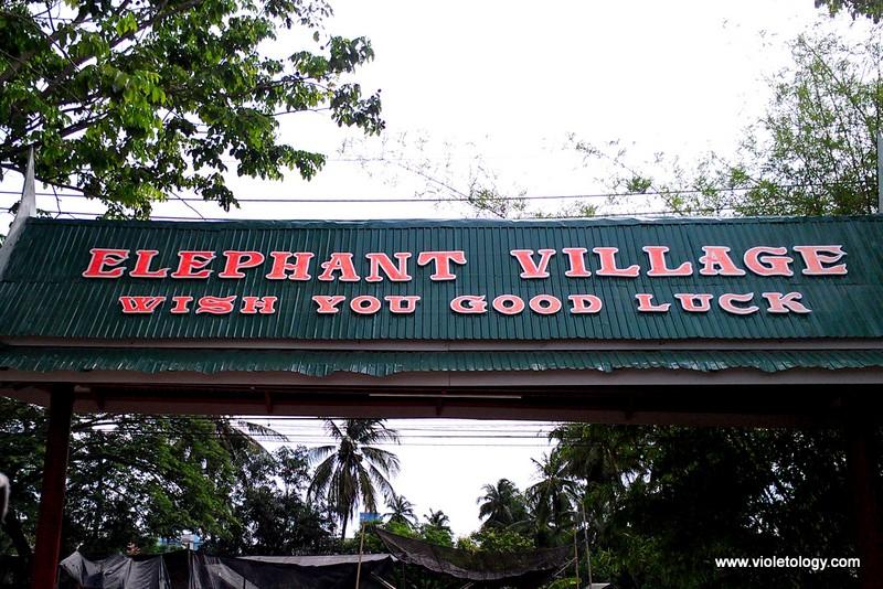 bangkok elephant (2)