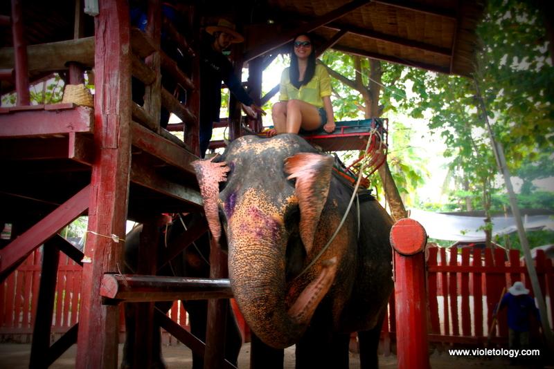 bangkok elephant (3)