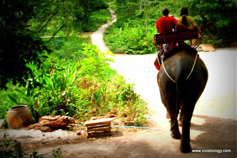 bangkok elephant (5)