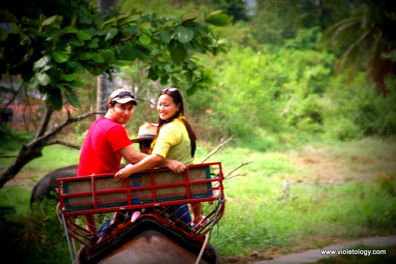 bangkok elephant (6)
