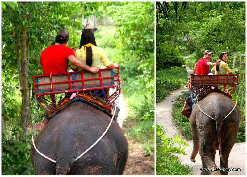 bangkok elephant (7)