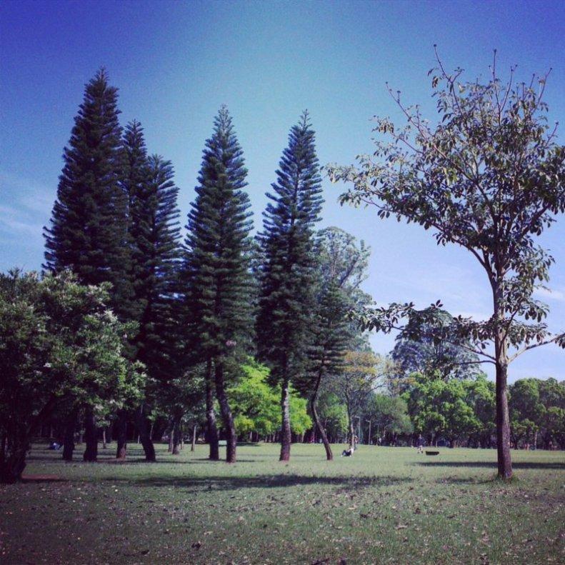ibirapuera (2)