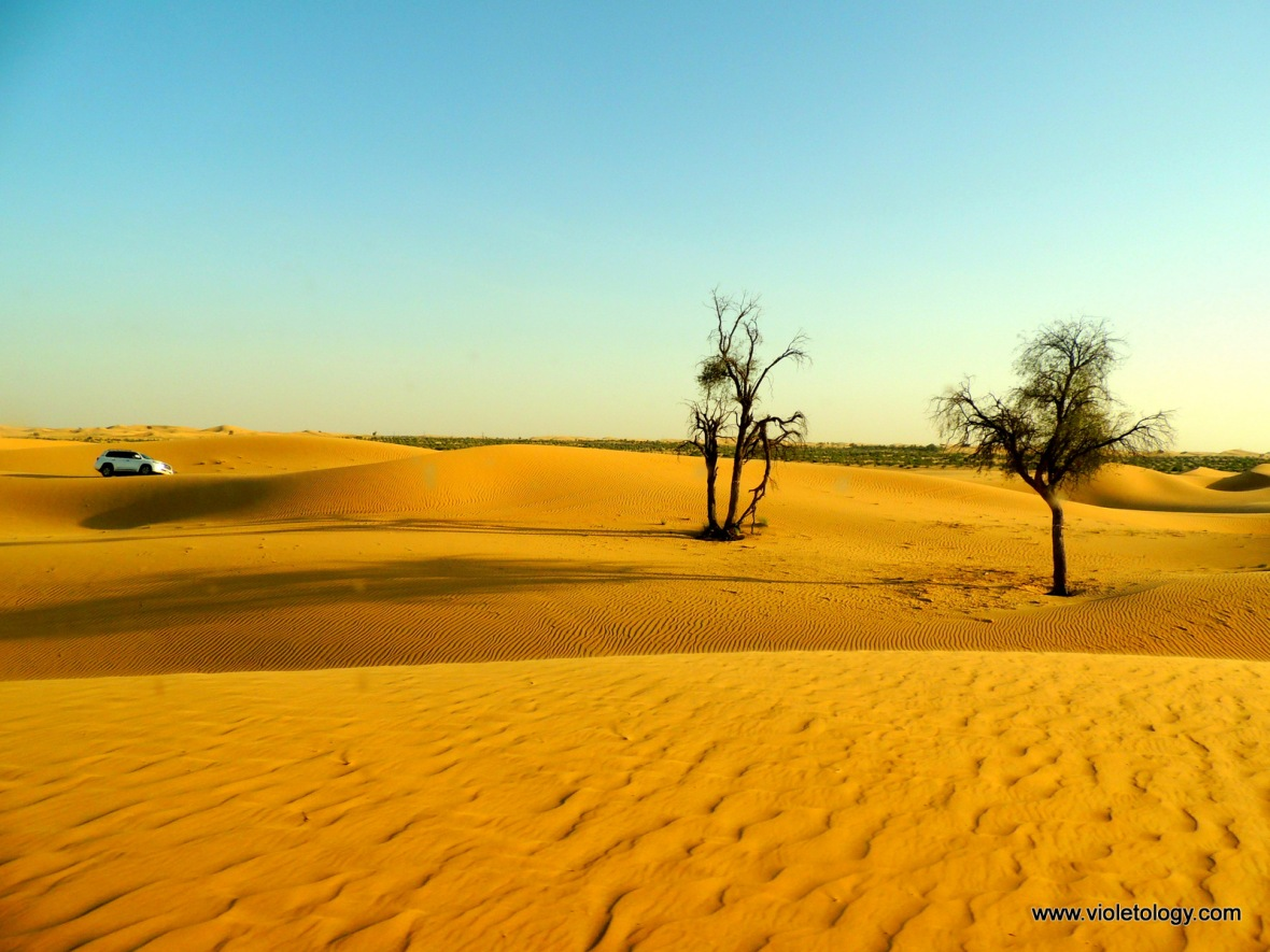 AUH Desert (28)