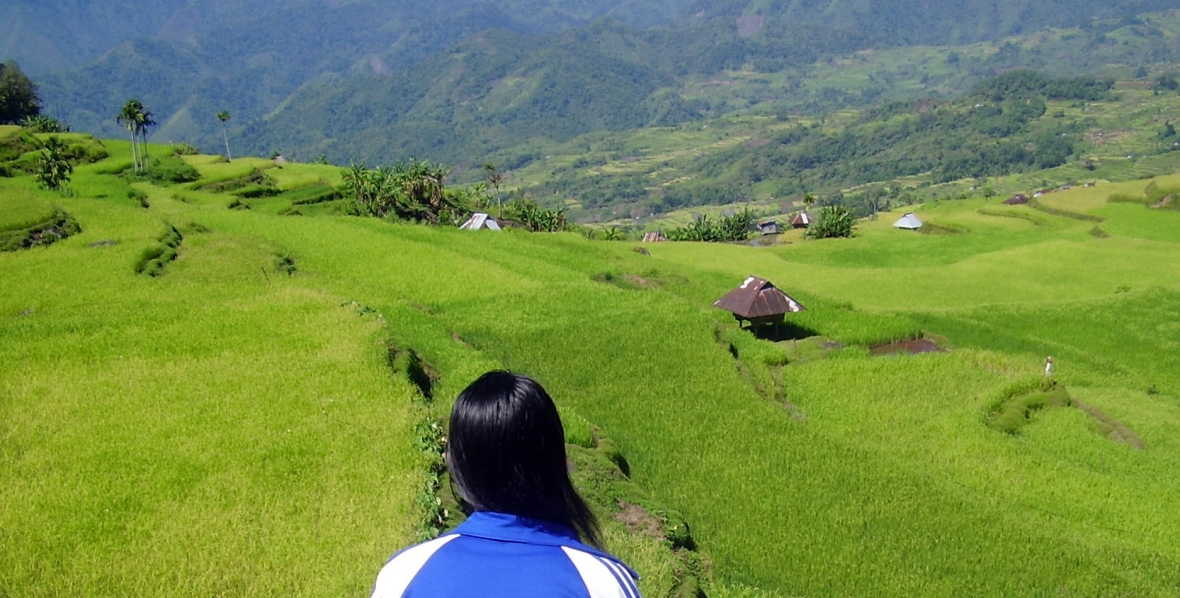 Balangao rice terraces