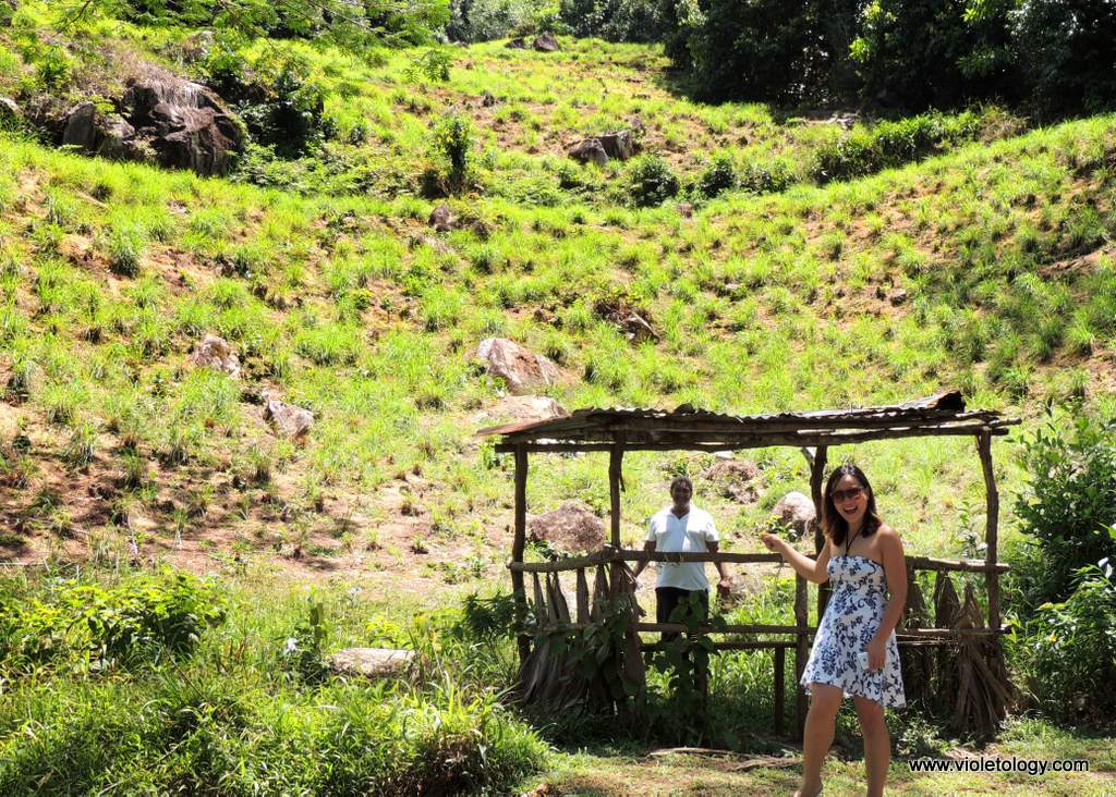 seychelles-tea-factory (2)