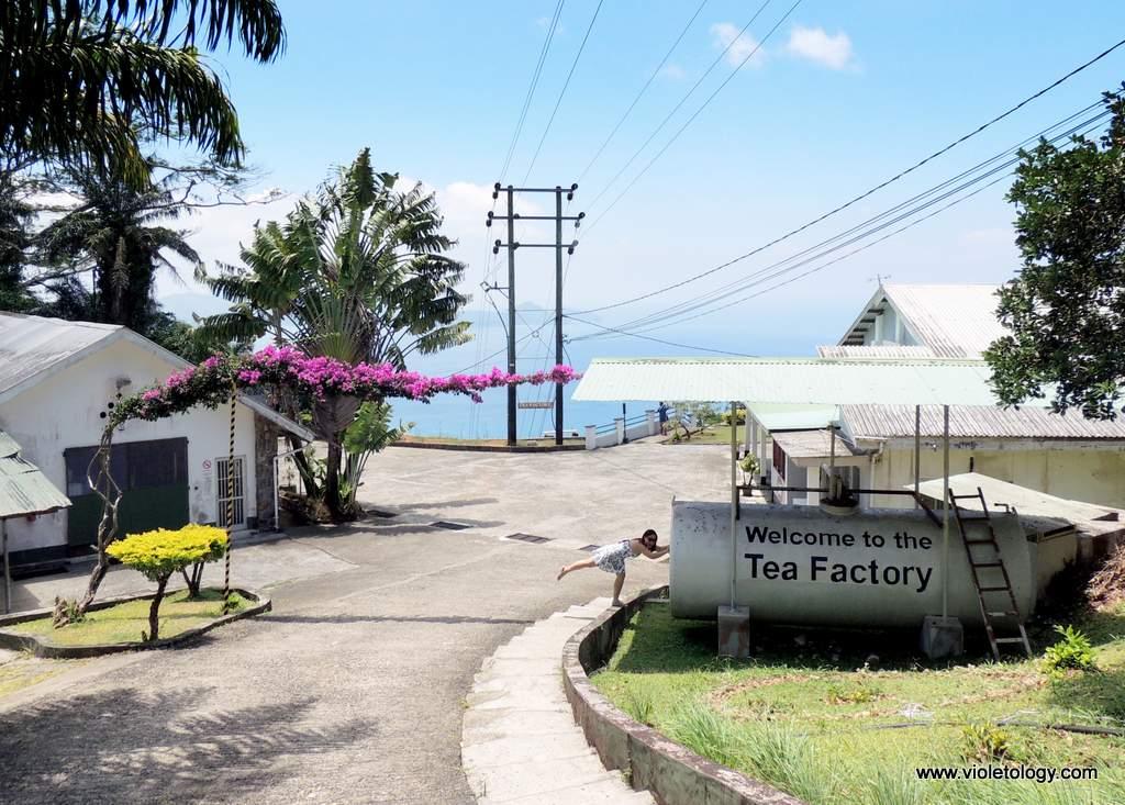 seychelles-tea-factory (4)