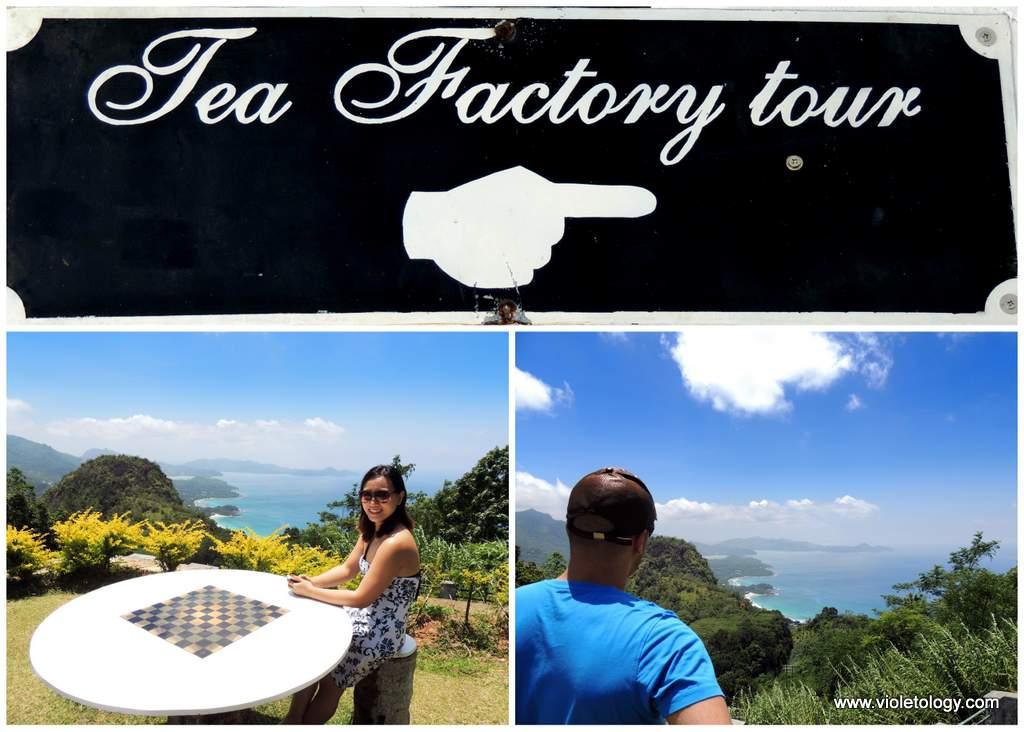 seychelles-tea-factory (5)