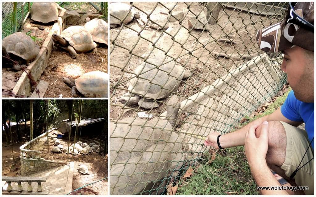 seychelles-turtles (2)