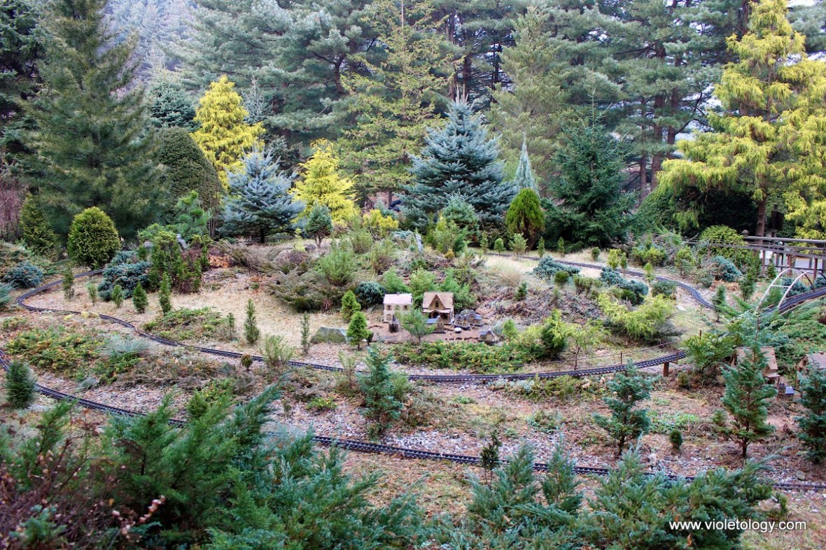 garden of morning calm conifer garden